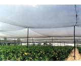 Anti Hail Netting,mesh nets,plastic nets,tree nets,orchard nets