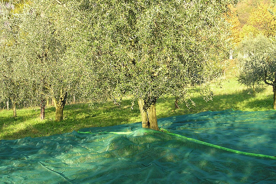Olive Netting,Olive Falling Nets,Olive Collect Netting,Olive Tree Harvest Netting