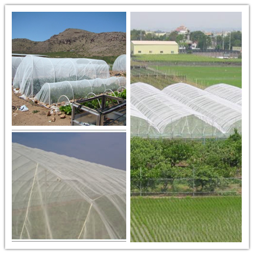 Insect Mesh Netting,Garden Anti Aphids Netting,Door Insect Mesh Netting,Window Screen Nets