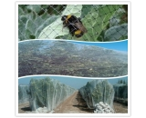 Honey Bee Netting,Bug Netting,Bee Proof Netting